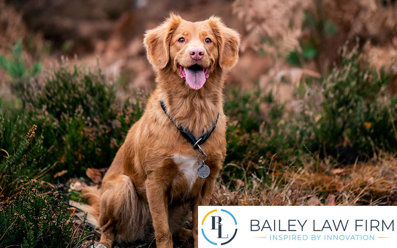 What to know about owning dogs in Arizona main