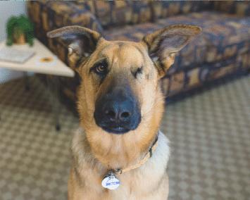 ollie the office dog bailey law cares